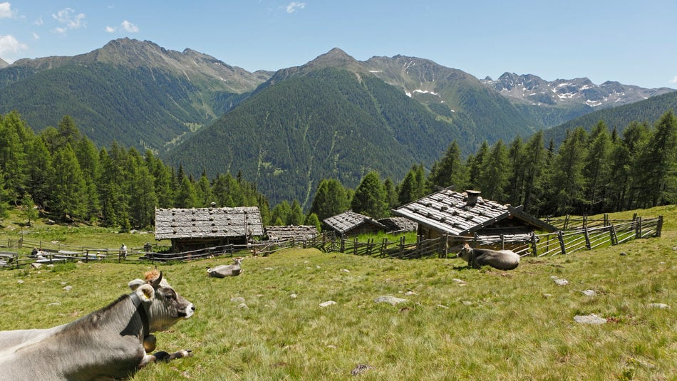 Charming alpine huts.
